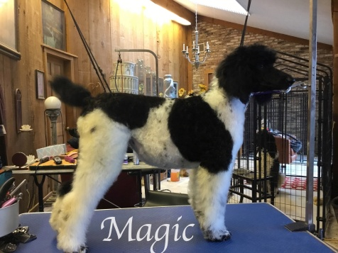 Magic Rt side grooming T