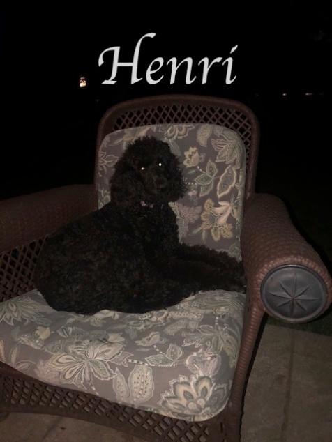 Henri 6