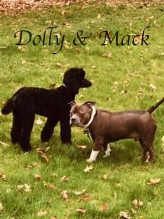 image5Dolly & Mack